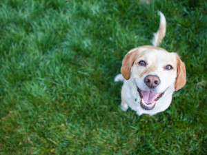 Pets welcome at Jackson Mountain Homes.