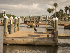 Docks at Englewood Beach & Yacht Club.