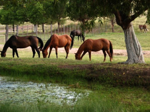 Horses at Cibolo Creek Ranch.