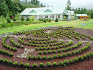 Maze at Honeymoon Bay Lodge & Retreat.