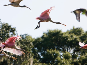 Wildlife at The Villas of Amelia Island Plantation.