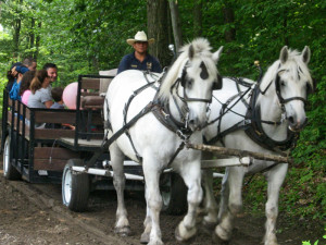Horse carriage ride at Rocking Horse Ranch Resort.
