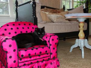 Pet friendly accommodations at Southampton Inn.