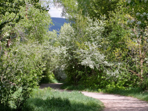 Path at St. Moritz Lodge & Condominiums.