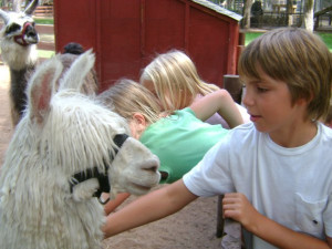 Petting zoo near Recreational Rental Properties, Inc.