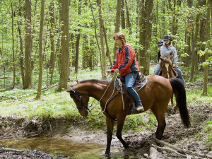 Horseback riding at Mountain Shadows Resort.