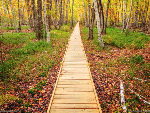 Boardwalk at Acadia Inn.