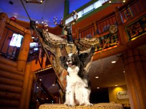 Pets welcomes at Nativo Lodge.