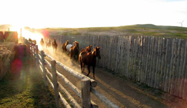 Horses running at Colorado Cattle Company Ranch.