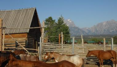 Horses at Triangle X Ranch.