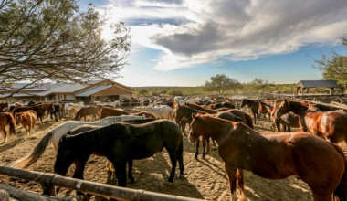 Horses at Tanque Verde Ranch.