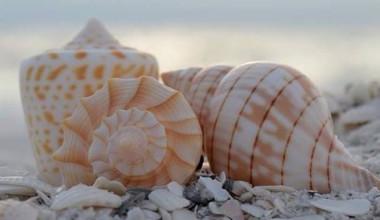 Sea shells at Casa Ybel Resort.