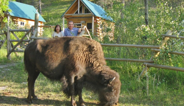 Bison at Bisonquest Wildlife Vacations.