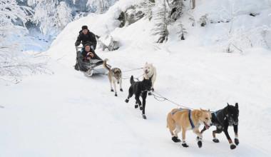 Dog sled rides at Four Seasons Resort Whistler.