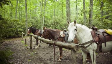 Horses at Cataloochee Ranch.