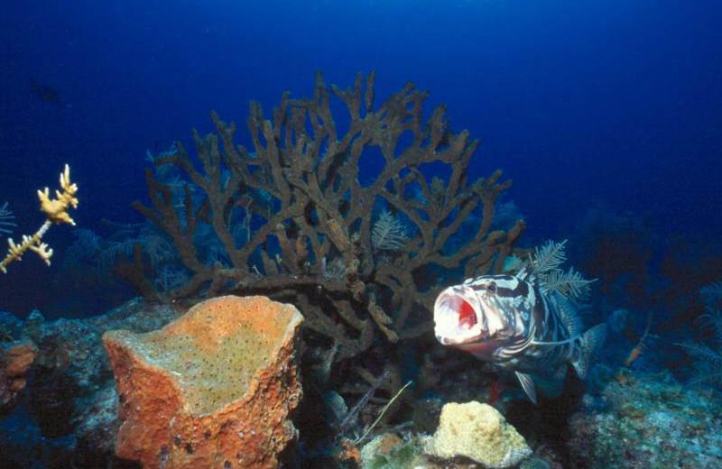 Underwater adventures at Orange Hill Beach Inn.