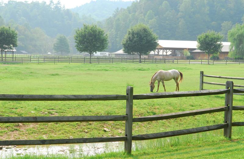 Horse on pasture at Leatherwood Mountains Resort.