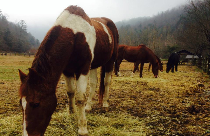 Horses at Leatherwood Mountains Resort.