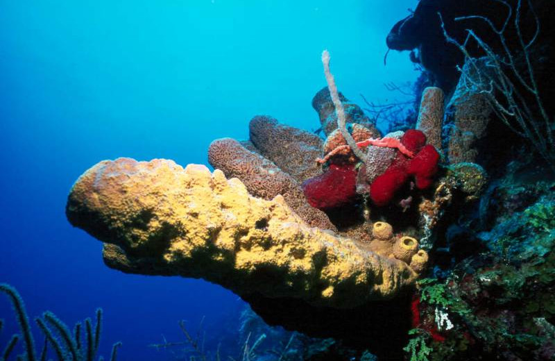 Coral at Orange Hill Beach Inn.