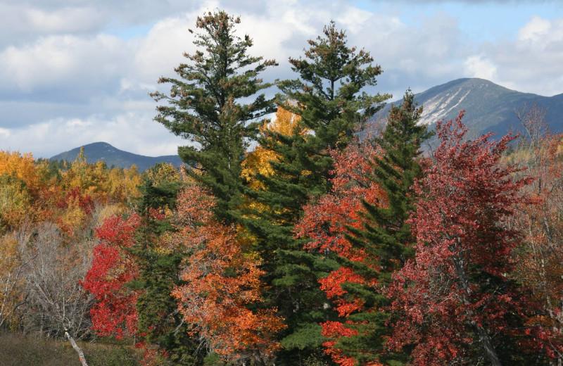 Fall leaves at Vacationland Inn.