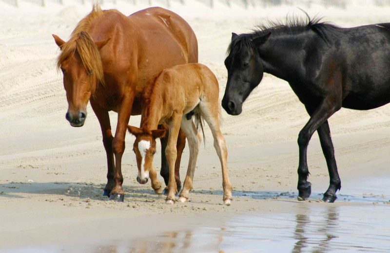 Wild horses at Realty World - First Coast Realty.