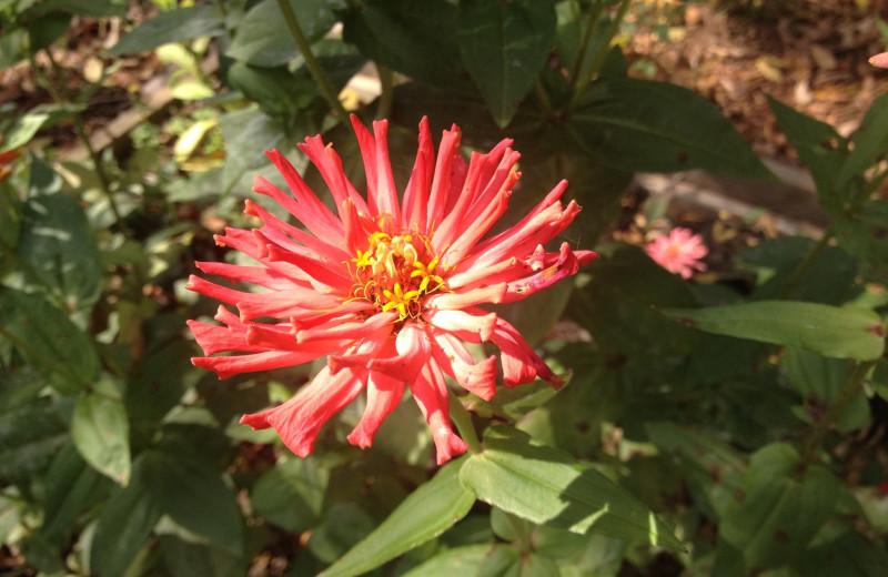 Flower at Inn at Monticello.