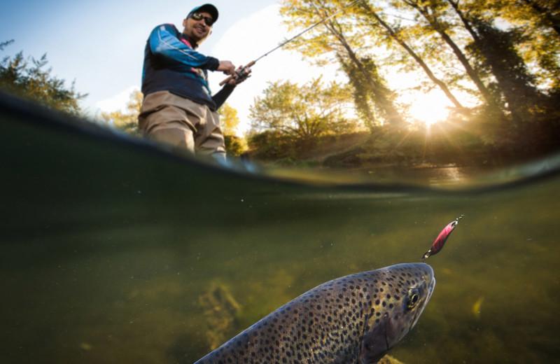 Fishing at Arkansas White River Cabins.