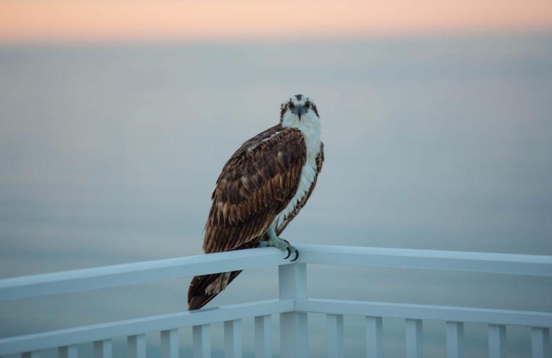 Birds at Shoreline Island Resort.
