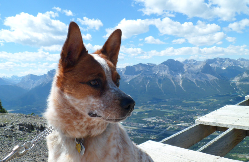 Pets welcome at Rocky Mountain Ski Lodge.