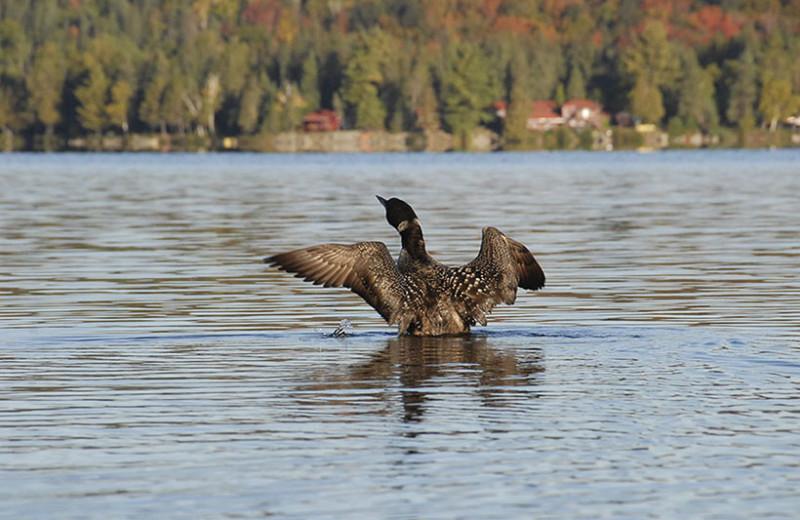 Birds on the lake at Killarney Lodge.