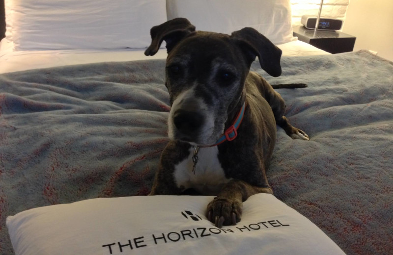 Pet friendly accommodations at The Horizon Hotel.