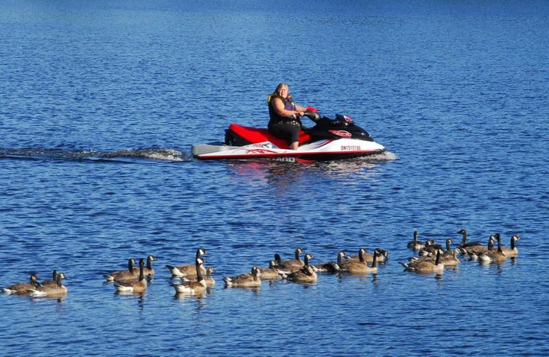 Paddle boat at Bayview Wildwood Resort.