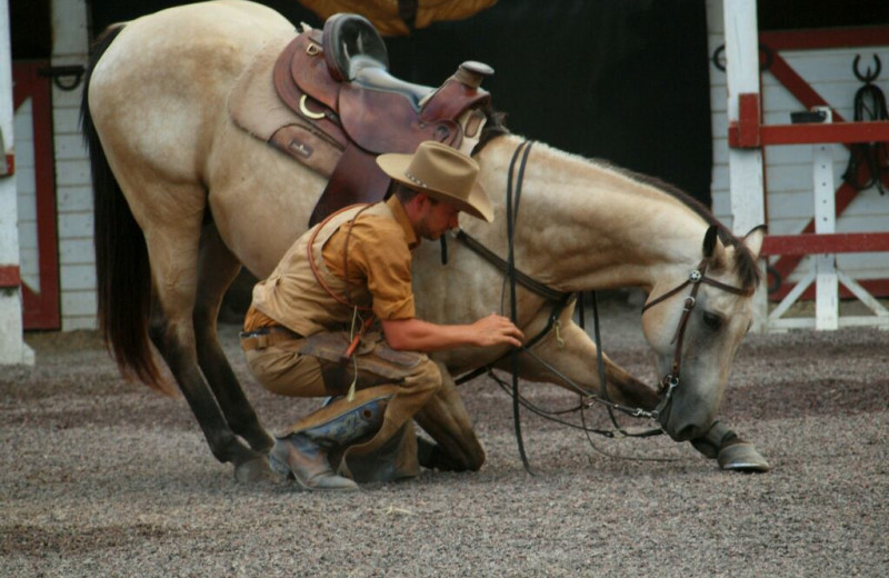 Rider and horse at A Tennessee Guest Ranch.