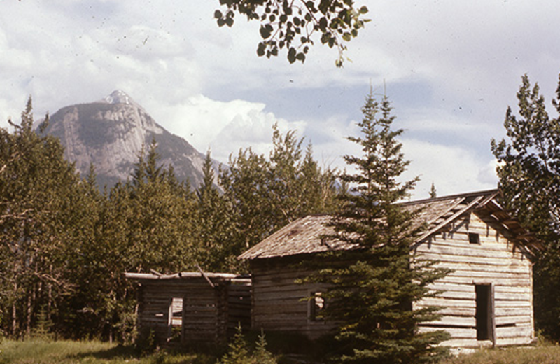 Exterior view of Pine Bungalows.