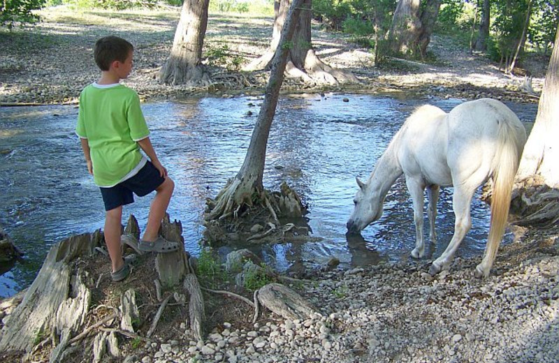 Horse drinking by the river at Twin Elm Ranch.