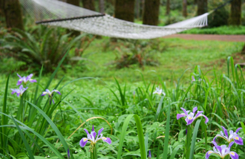 Hammock at WildSpring Guest Habitat.