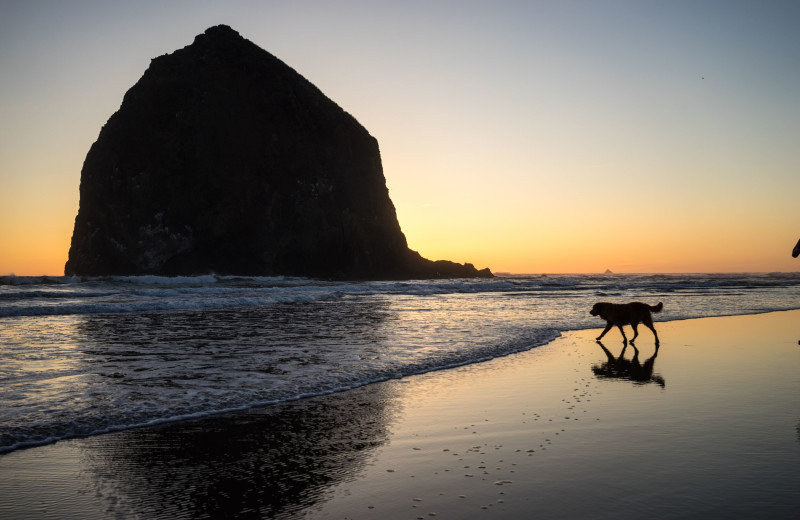 Pet friendly beach at Hallmark Resort & Spa Cannon Beach.