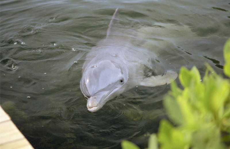 Dophins at Coral Cay Beachfront Condominiums