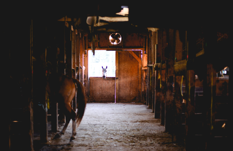 Horses in stable at Falcon Beach Ranch.