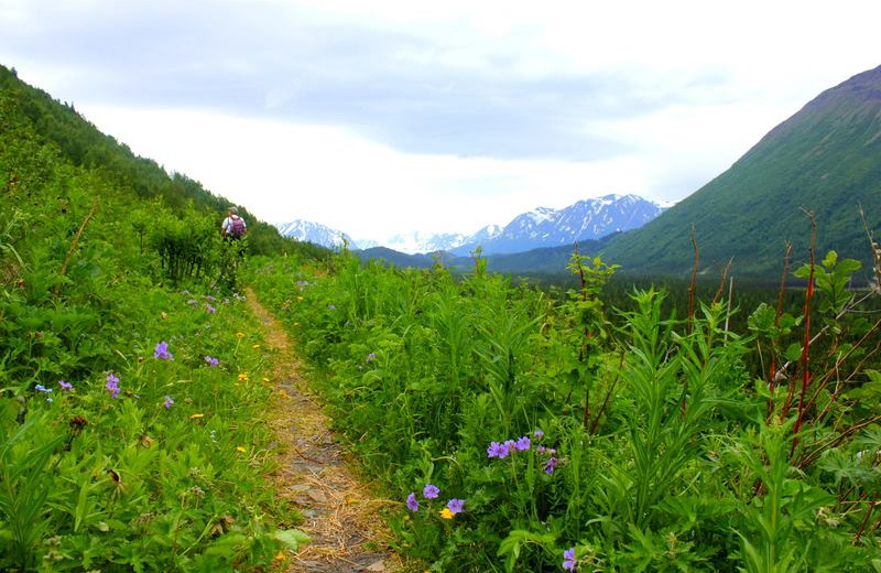 Hiking trail at Soldotna B&B Lodge and Alaska Fishing Charters.