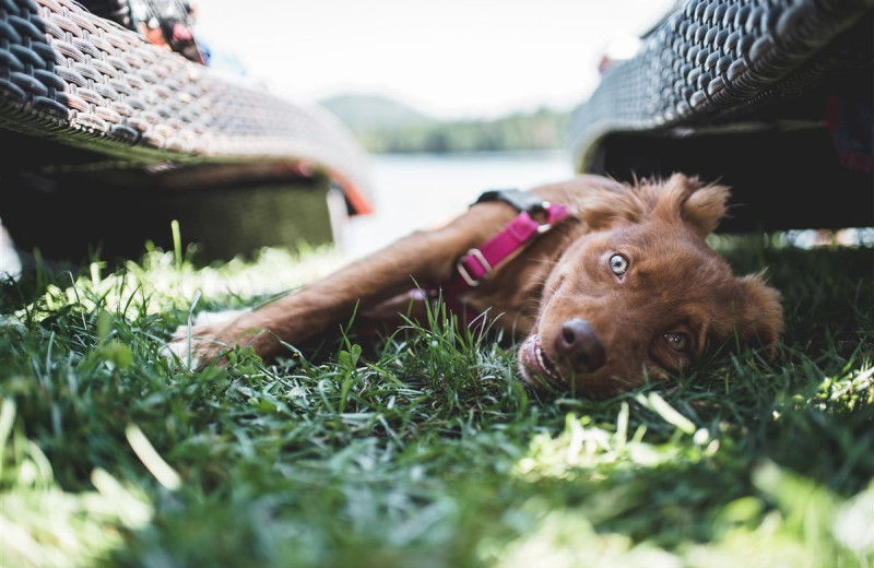 Pets welcome at Golden Arrow Lakeside Resort.