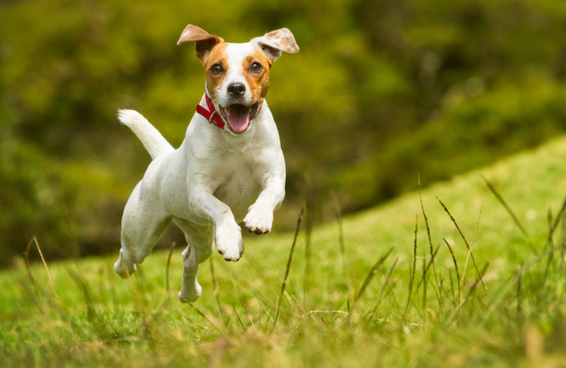 Pets welcome at Sand County Vacation Rentals.