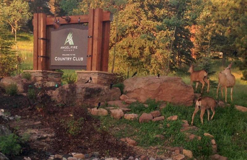Deer at Resort Properties of Angel Fire.