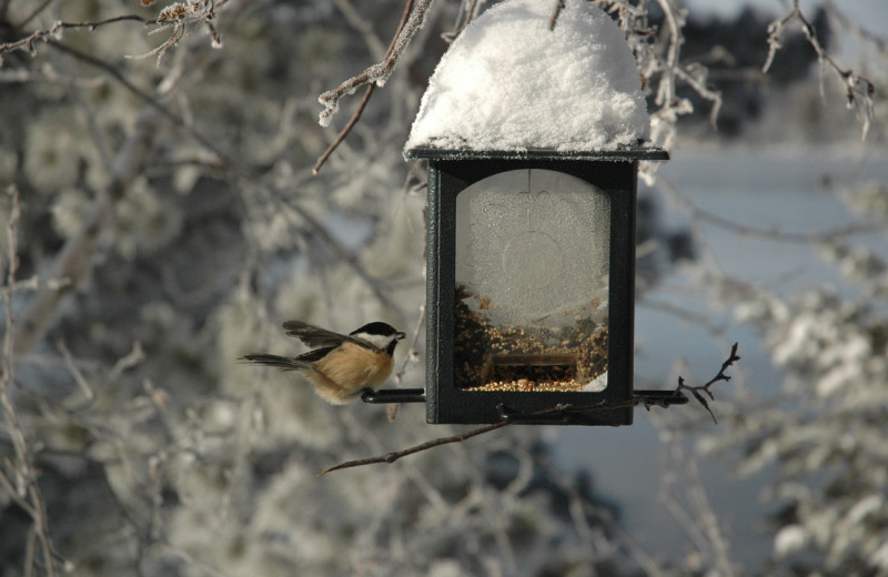 Bird at feeder at Smith Camps.