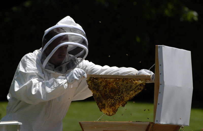 Bee keeping at The Spa at Norwich Inn.