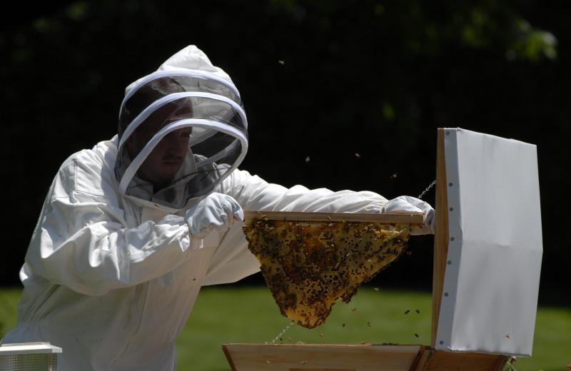 Bee keeping at The Spa at Norwich Inn.