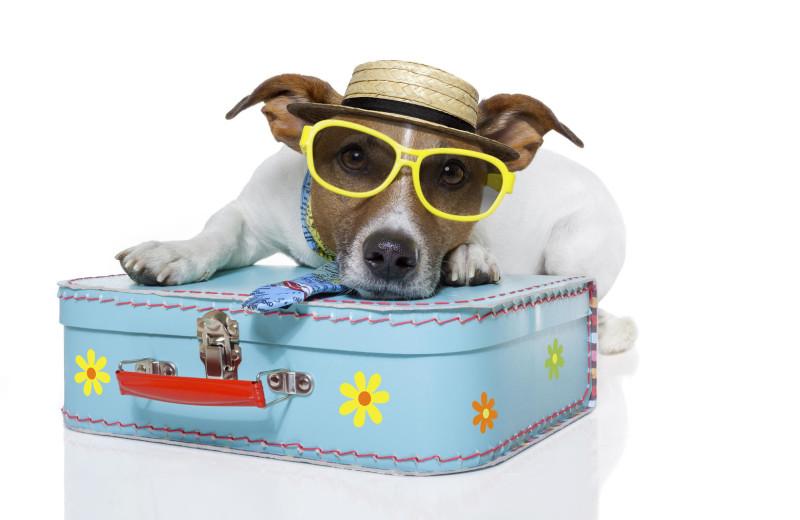 Pets welcome at Destin Getaways.