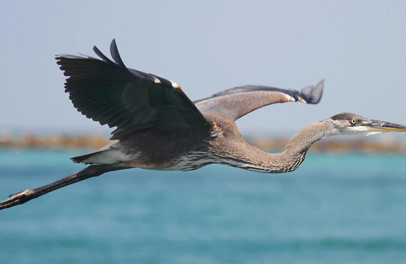 Bird at Paradise Gulf Properties.