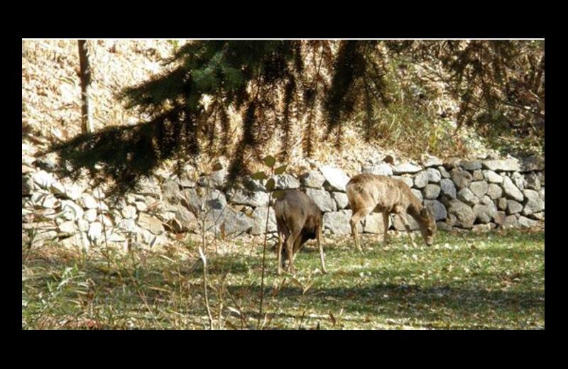Wildlife at Boulder Mountain Lodge.