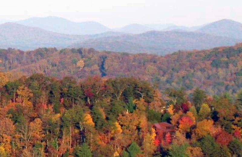 Fall colors at Black Bear Cabin Rentals.